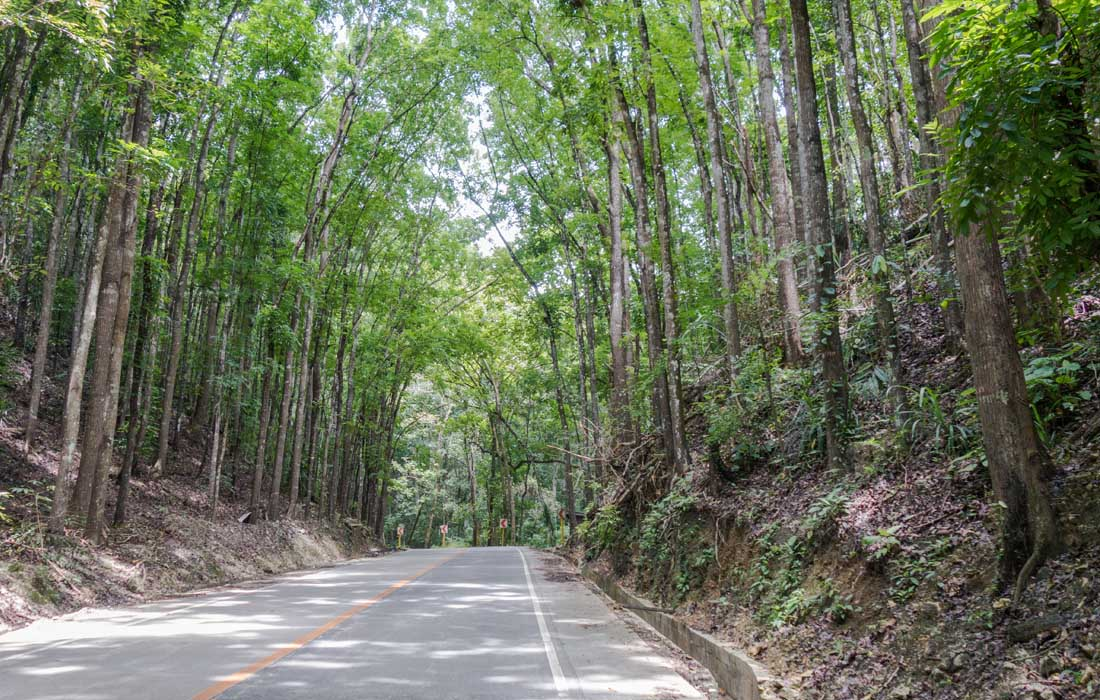 Bohol tour Man made ferest